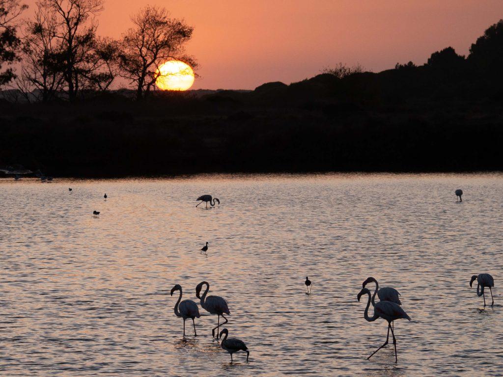 Flamingos Algarve