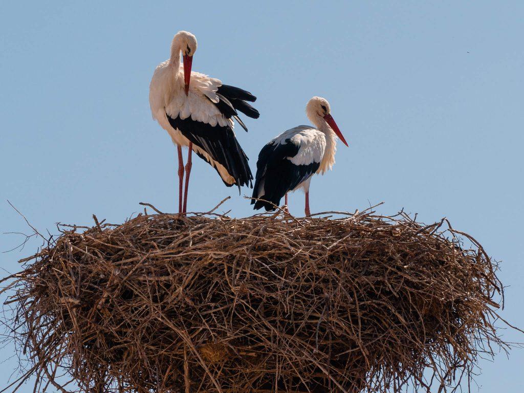 Stork Nest Algarve