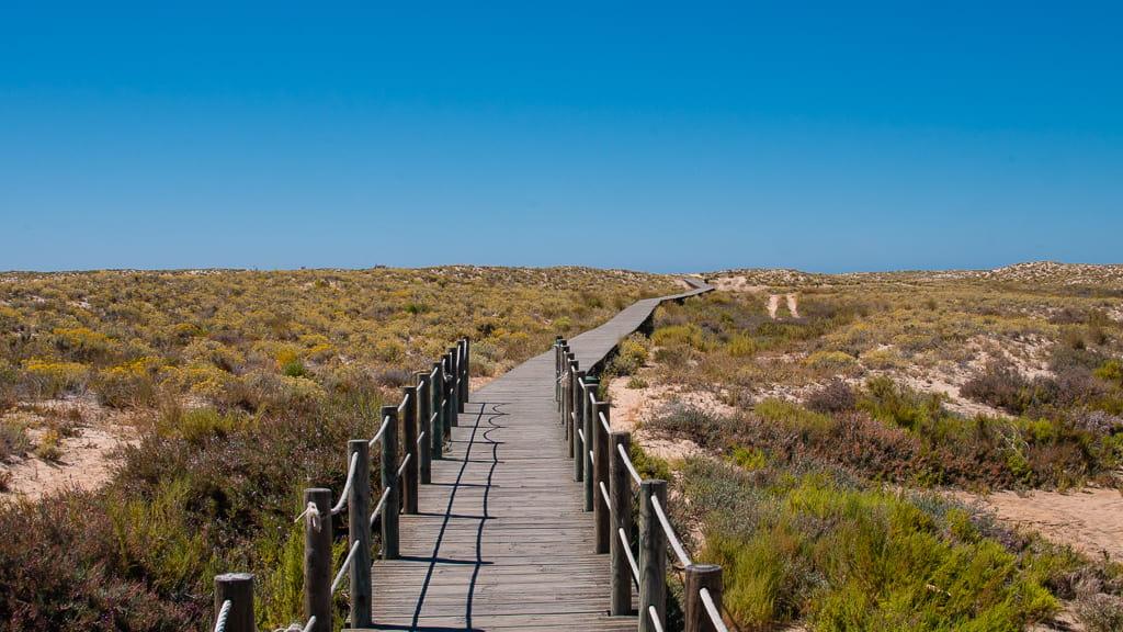 Dune Path Ilha da Culatra