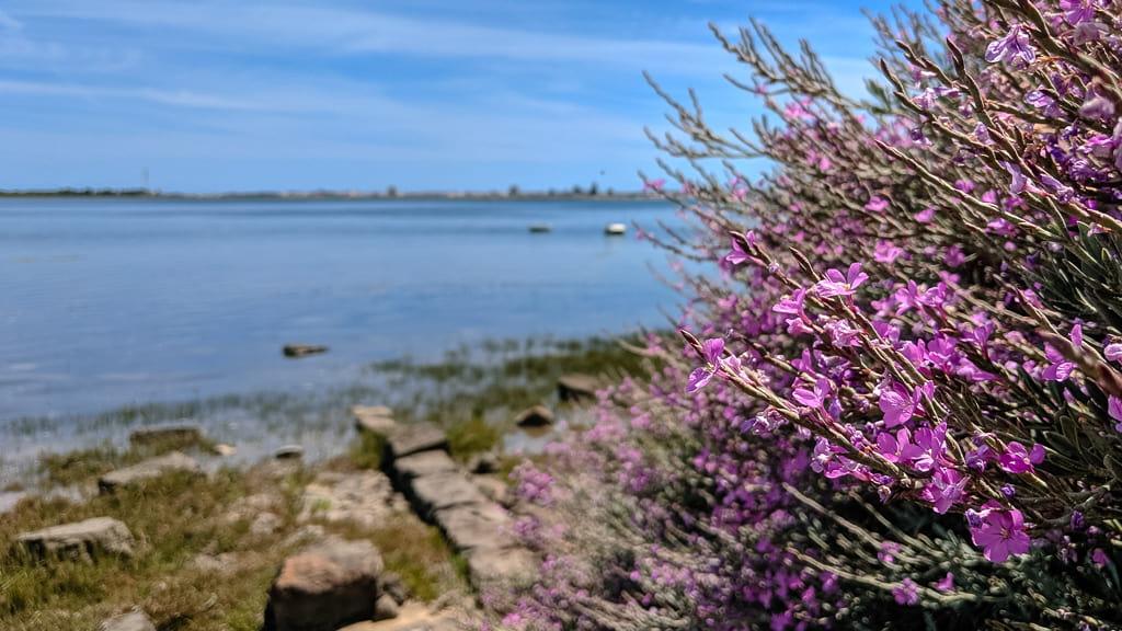 Hiking alongside the Ria Formosa lagoon