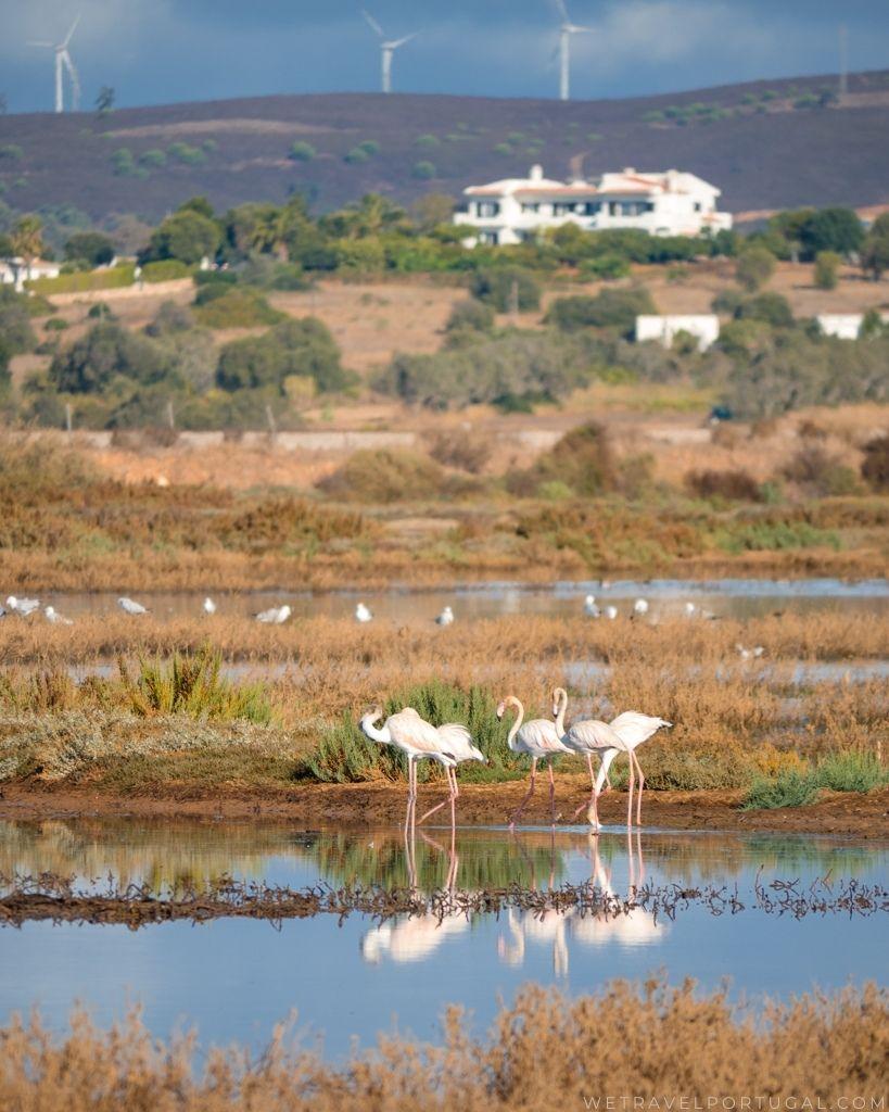Flamingos Ria de Alvor