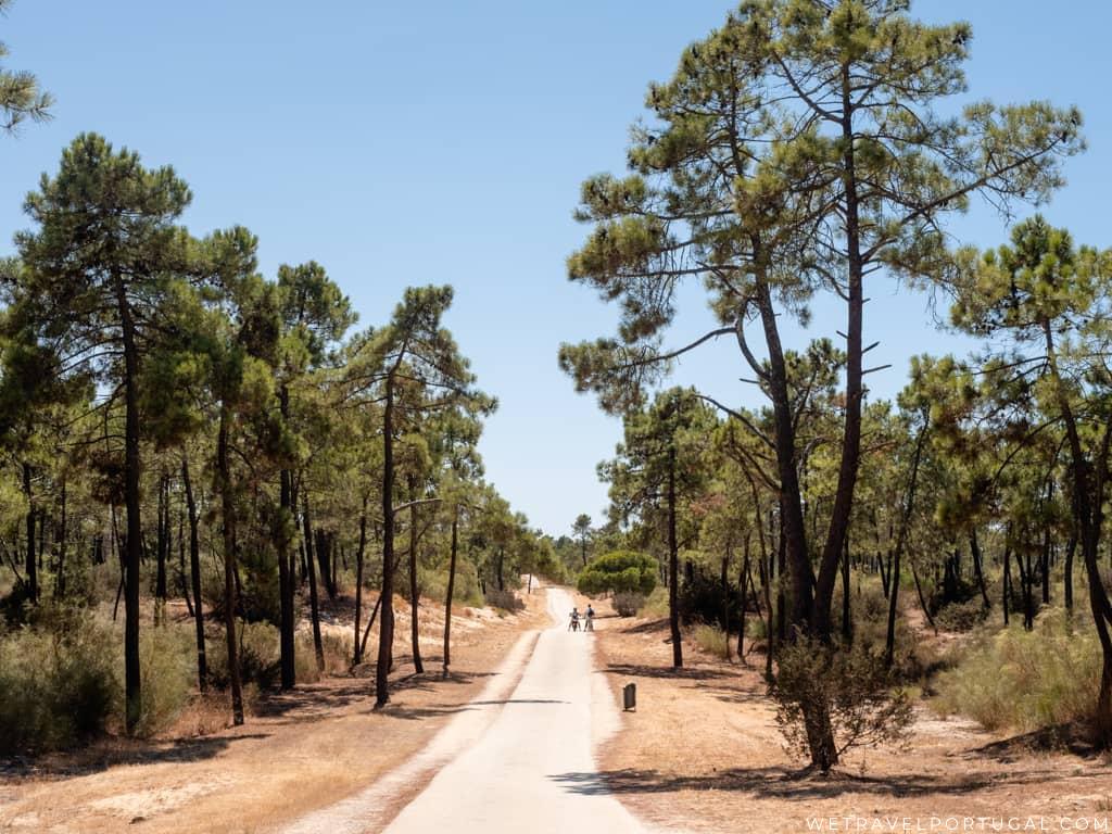 Pine Forest Surrounding Monte Gordo